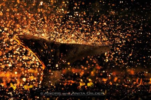 AWG_20101014_0026